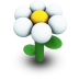 White Daisy Icon 72px png