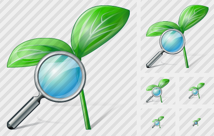 Sprouts Search Icon